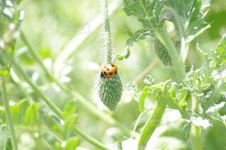 春,昆虫,てんとう虫,草木