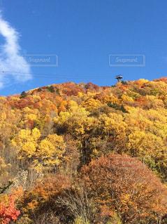 茂みや木のグループの写真・画像素材[758571]