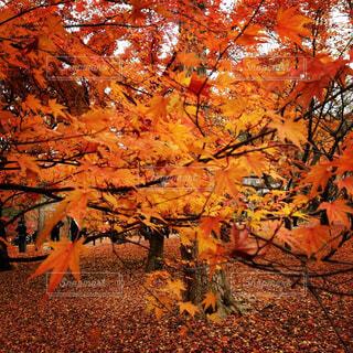 京都の写真・画像素材[773648]