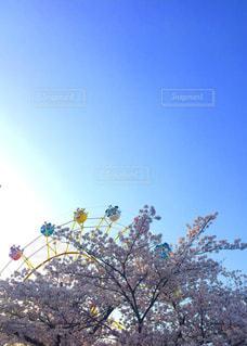 王子動物園の写真・画像素材[1098513]