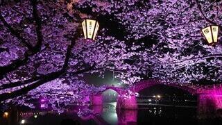 花,桜,夜景,花見,ライトアップ,錦帯橋