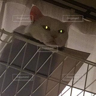 猫の写真・画像素材[211408]