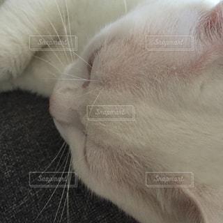 猫の写真・画像素材[240439]