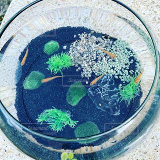水,ペット,メダカ,アクアリウム,ガラス鉢