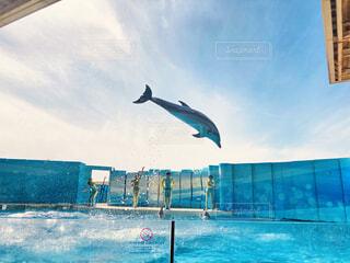 空,夏,屋外,イルカ,水族館,水面,泳ぐ,涼しい,ショー,テキスト,スイミング プール