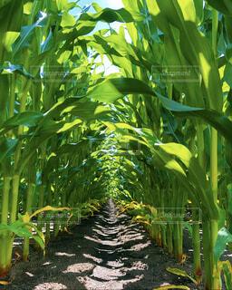 自然,屋外,緑,青空,葉,土,トンネル,草木,陸生植物