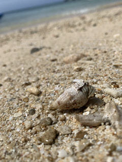 海,夏,動物,屋外,砂,ビーチ,かわいい,晴れ,青空,青,砂浜,貝殻,沖縄,地面,夏休み,カニ,驚き,爬虫類,ヤドカリ,びっくり,映え,ギョロ目