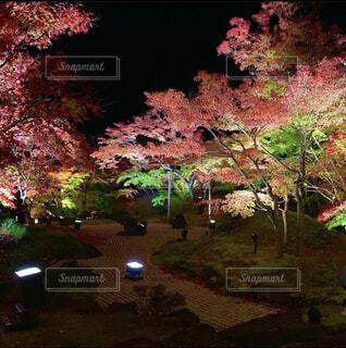 秋,夜,紅葉,屋外,赤,葉,もみじ,樹木,ライトアップ