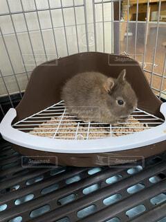 ハムスター,マウス
