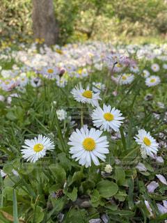 花,屋外,緑,植物,白,黄色,草,雑草,草木,初心者,花粉