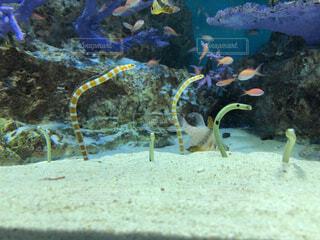 動物,魚,砂,水族館,水面,葉,水中,珊瑚礁,チンアナゴ,コーラル,海洋無脊椎動物,海洋生物学,生命体
