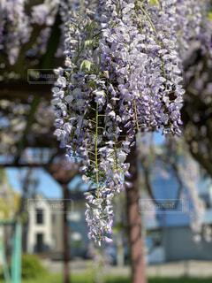 花のクローズアップの写真・画像素材[4535587]
