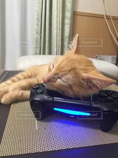 猫,動物,屋内,かわいい,子猫,PS4,まくら,茶とら,コントローラー