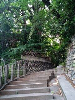 建物,屋外,階段,樹木,草木,ガーデン