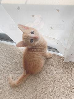 動物,かわいい,室内,窓,子猫