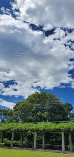 自然,空,公園,屋外,雲,青空,青い空,樹木,草木