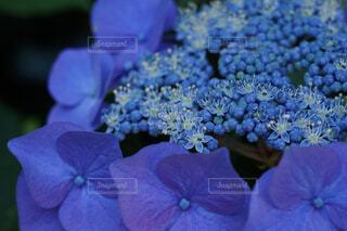 花,青,紫,紫陽花,草木