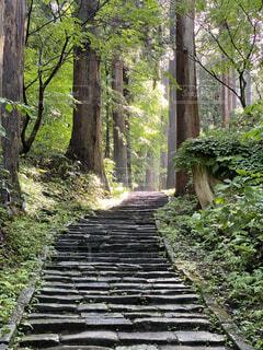 森林,屋外,森,日差し,光,樹木,新緑,陰,石段