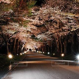 自然,屋外,夜桜,桜並木,樹木,洞窟,草木