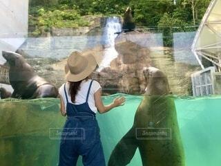 トドさんと仲良しになったの写真・画像素材[4679486]