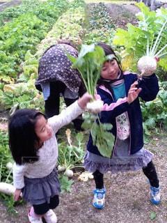 家族,風景,屋外,少女,草,人物,人,幼児,収穫,草木