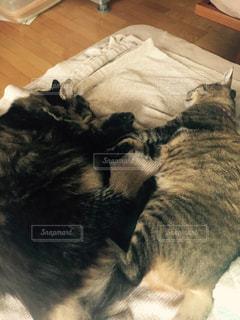 猫の写真・画像素材[287089]