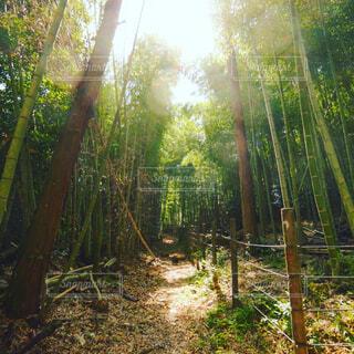 自然,風景,秋,屋外,樹木,ジャングル,草木,ウッドランド