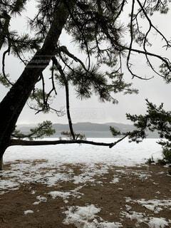 自然,風景,空,雪,屋外,水面,樹木,針葉樹