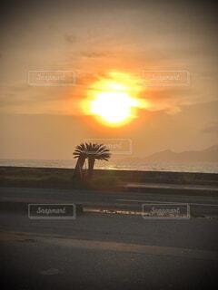 自然,風景,海,空,屋外,太陽,ビーチ,雲,夕暮れ,水面,樹木,ヤシの木