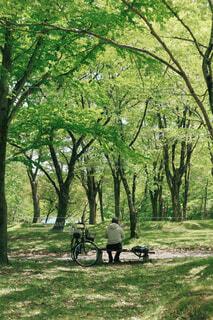 公園,自転車,森林,屋外,草原,景色,草,樹木,新緑,懐かしい,生命,日陰,草木,車両,ホイール,力,オーク,エリア,陸上車両,自転車のホイール