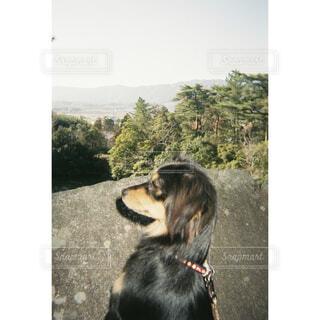 犬,自然,風景,空,公園,動物,屋外,散歩,霧,日常,走る,樹木,人物,愛,地面,フィルム,生命,心,瞬間,安らぎ,力強さ,主役,切り取り,影と光,ある一日,かけ走る