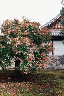 空,花,秋,森林,屋外,白,草,家,大自然,樹木,懐かしい,生命,夢,素敵,草木,ガーデン,力