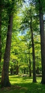 自然,公園,清々しい,樹木,神秘的