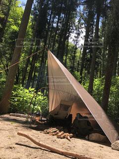 屋外,樹木,キャンプ,地面,テント,ソロキャンプ,草木,タープ