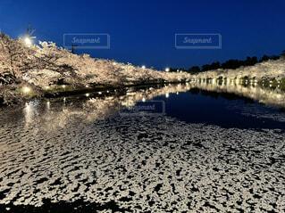 自然,風景,空,桜,水面,ライトアップ,ブロッサム
