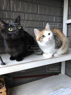 猫,動物,屋内,黒,子猫,座る