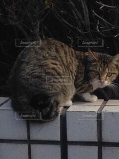 猫,動物,屋外,野良猫,野良,キジトラ,ネコ科,ノラ,バックシャン