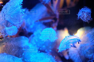 動物,魚,青,水族館,暗い,葉,水中,クラゲ,海月,カラー,くらげ,水母,腔腸動物,海洋無脊椎動物