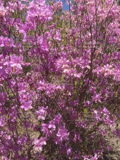 花,ピンク,緑,紫,草木