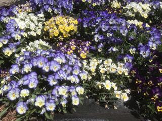 花,お花畑,草木,ガーデン,フローラ