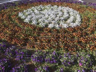 花,お花畑,きれい,紫,お花,装飾,草木