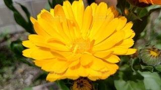 黄色の花の写真・画像素材[4471024]