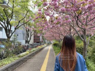 自然,風景,花,春,桜,屋外,散歩,桜並木,景色,樹木,人物,人,flower,デート,Spring,彼女,ブロッサム,インスタ映え