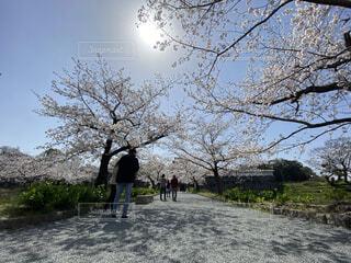 自然,風景,空,花,春,桜,鳥,屋外,湖,散歩,川,水面,桜並木,景色,樹木,人物,人,flower,草木,Spring,さくら,ブロッサム,インスタ映え