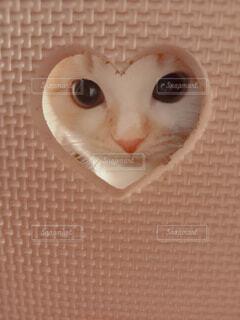 猫,動物,屋内,かわいい,茶色,ハート,子猫,覗き見