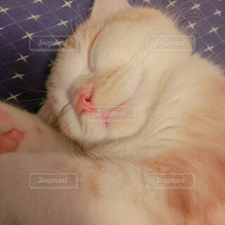 猫,動物,屋内,かわいい,茶色,景色,寝顔,子猫,おやすみ,舌