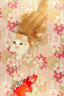 赤べこと猫ちゃんの写真・画像素材[4480100]