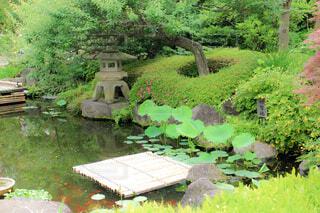 花,木,屋外,綺麗,水面,池,景色,草,美しい,樹木,庭園,新緑,石,和,和風,草木,眺め,鯉,ガーデン