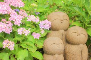 自然,花,ピンク,緑,かわいい,あじさい,紫陽花,可愛い,梅雨,お地蔵,草木,お地蔵さん,アジサイ