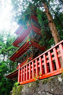 空,建物,木,屋外,神社,綺麗,日光,美しい,樹木,庭園,新緑,和,和風,寺,仏教,眺め